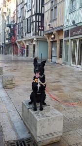 éducateur canin Troyes et ses environs