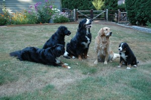 dogs-1181971_640